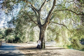 engagement photos with big old tree in irvine park